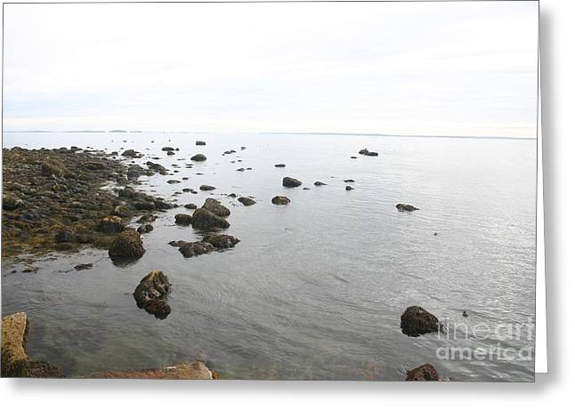 Maine Bay Greeting Card by Dennis Curry