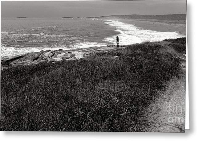 Maine Contemplation Greeting Card