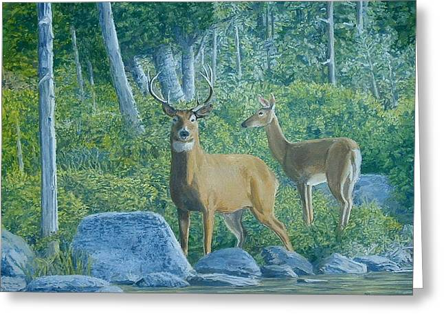 Maine Deer Greeting Card by Lee Thomason