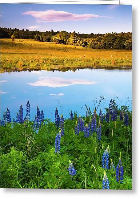 Greeting Card featuring the photograph Maine Field Of Lupines by Ranjay Mitra