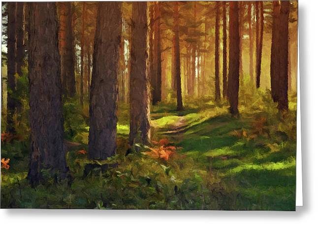 Greeting Card featuring the photograph Maine Forest Sunset by David Dehner