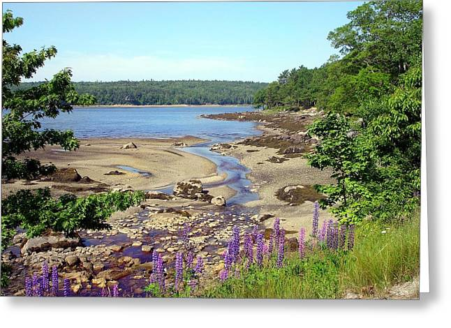 Maine Lupines Greeting Card