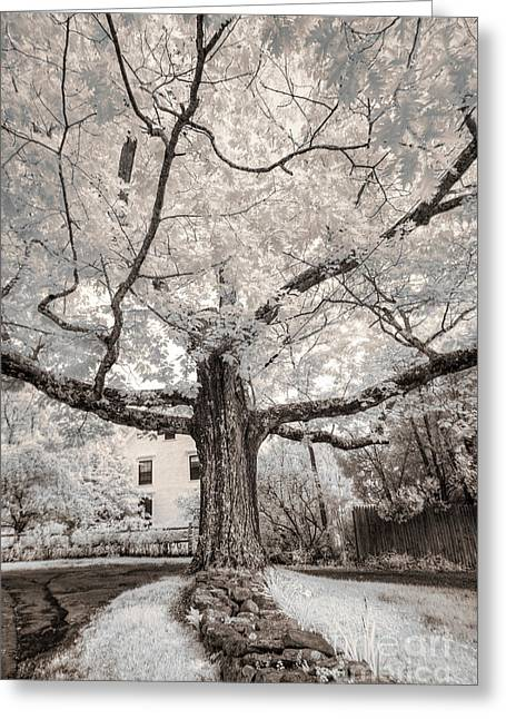 Greeting Card featuring the photograph Maine Neighborhood Tree by Craig J Satterlee