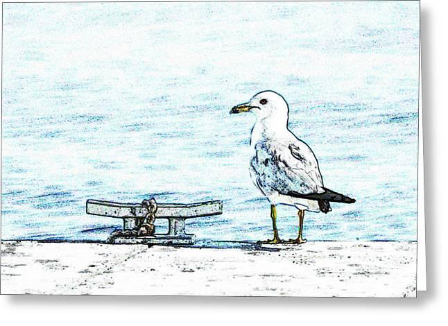 Maine Seagull Greeting Card