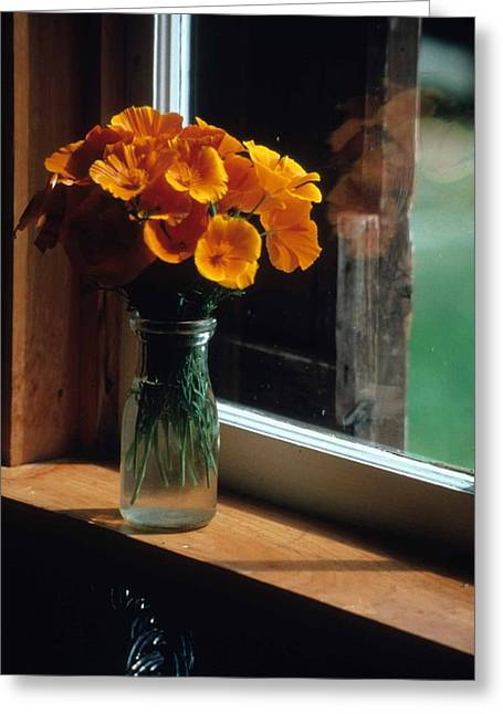Maine Windowsill Greeting Card by Laurie Paci