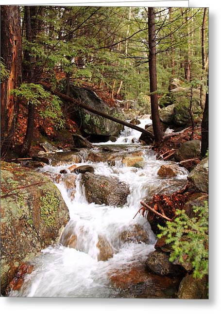 Maine Woods February Greeting Card