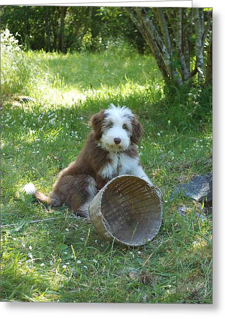 Maisie With Basket Greeting Card by Mark Alan Perry