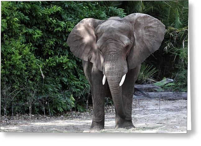Majestic African Elephant Greeting Card