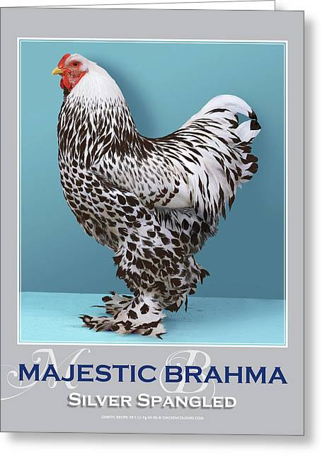 Majestic Brahma Silver Spangled Greeting Card