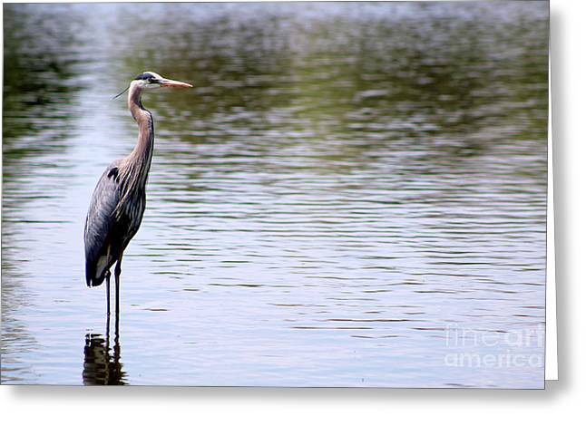 Majestic Great Blue Heron Greeting Card