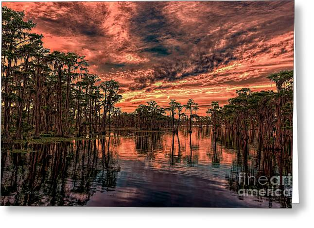 Majestic Cypress Paradise Sunset Greeting Card