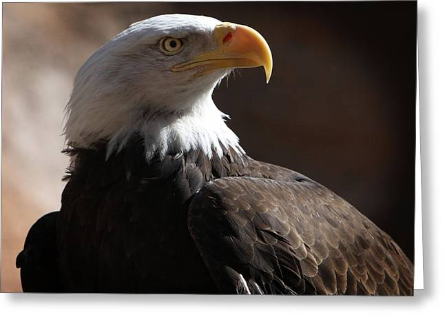 Majestic Eagle Greeting Card by Marie Leslie