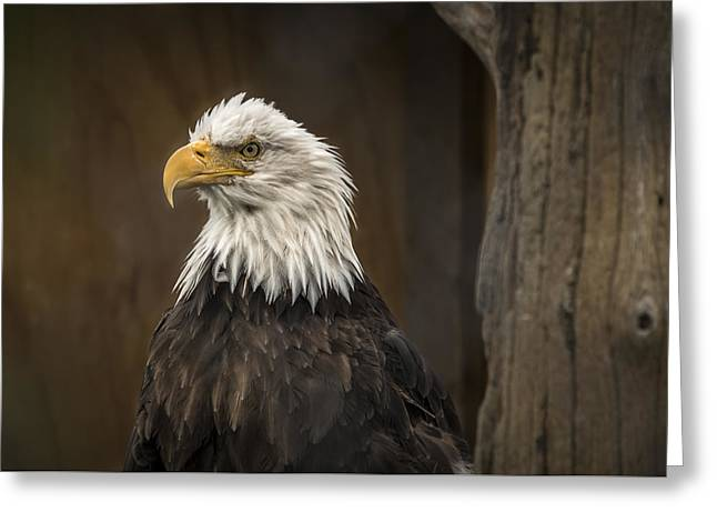 Majestic Eagle Greeting Card by Robin Williams