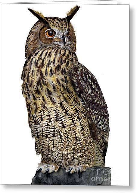 Greeting Card featuring the painting Majestic Eurasian Northern Eagle Owl Bubo Bubo - Hibou Grand-duc - Buho Real - Nationalpark Eifel by Urft Valley Art