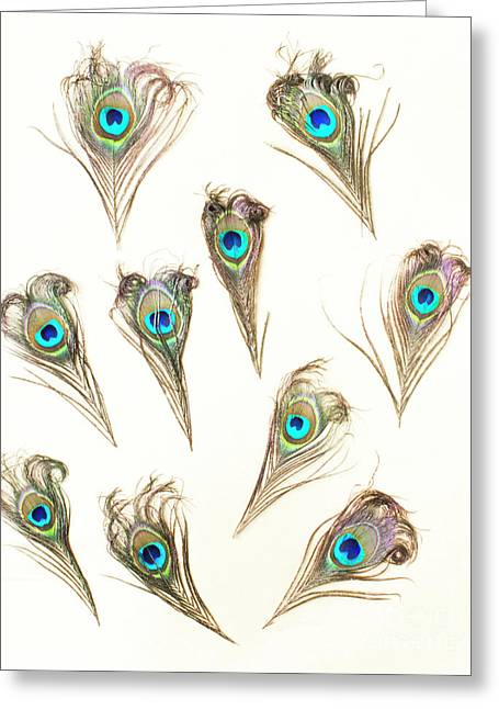 Majestic Feathers Greeting Card