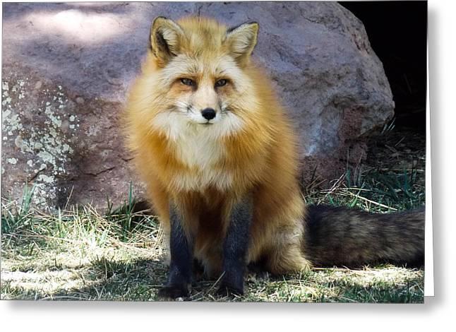 Majestic Fox Greeting Card by Nina Pilgrim