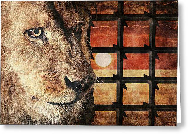 Majestic Lion In Captivity Greeting Card
