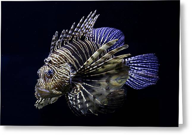 Majestic Lionfish Greeting Card
