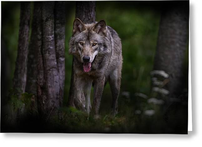 Wolf cub greeting cards page 6 of 12 fine art america majestic greeting card m4hsunfo