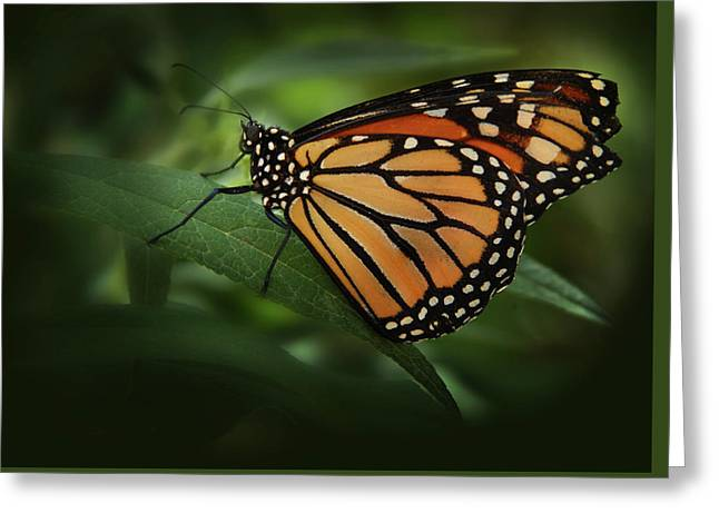 Majestic Monarch Greeting Card by Marie Leslie