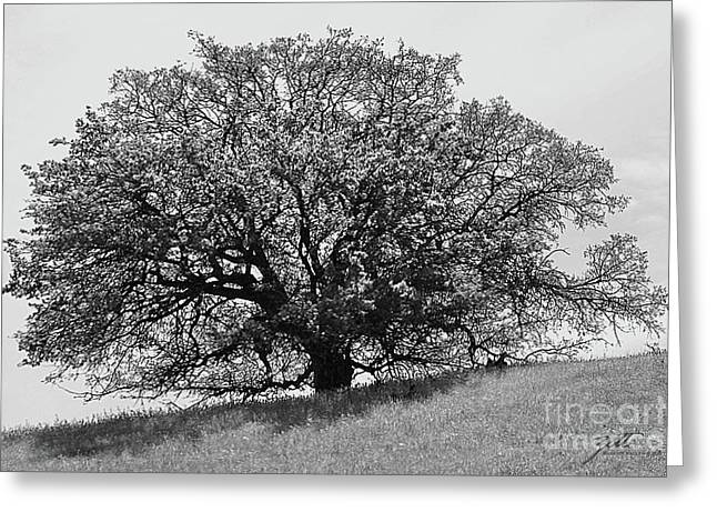 Majestic Oak Greeting Card