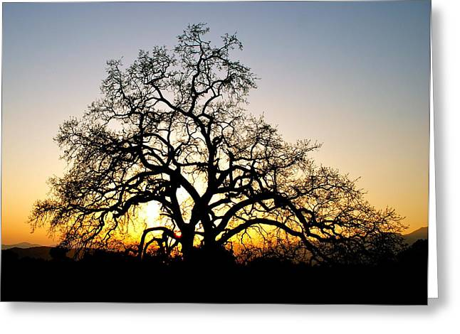 Majestic Oak Tree Sunset Greeting Card