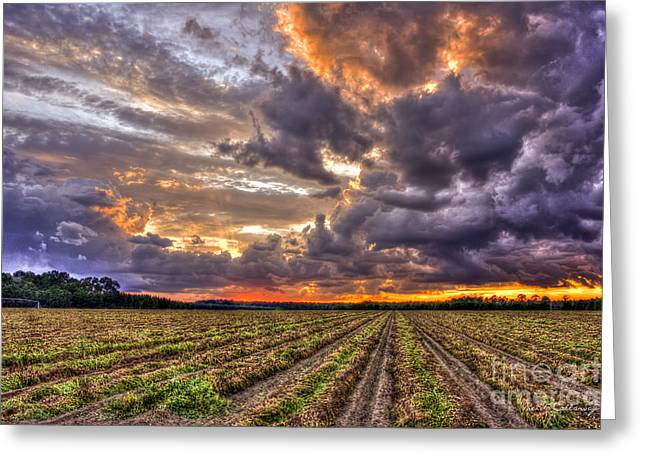 Greeting Card featuring the photograph Majestic Peanut Harvest Sunset Art by Reid Callaway