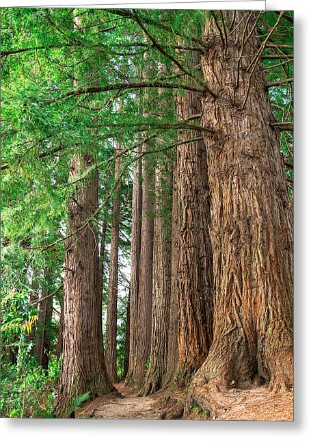 Majestic Redwoods Greeting Card by Martin Capek