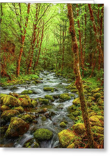 Greeting Card featuring the photograph Majestic Stream by Tyra  OBryant