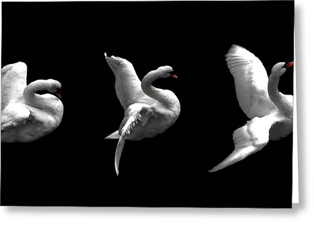 Ducks Digital Art Greeting Cards - Majestic Swan Triptych Greeting Card by Dale   Ford