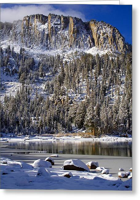 Majestically Cool Greeting Card by Chris Brannen