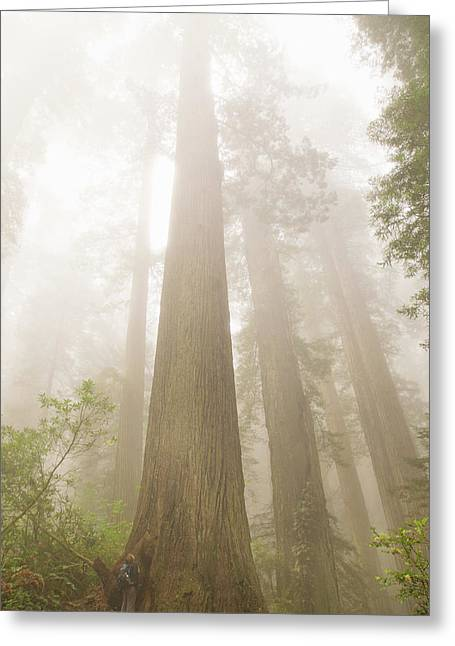 Majesty Of The Redwoods Greeting Card by Kunal Mehra