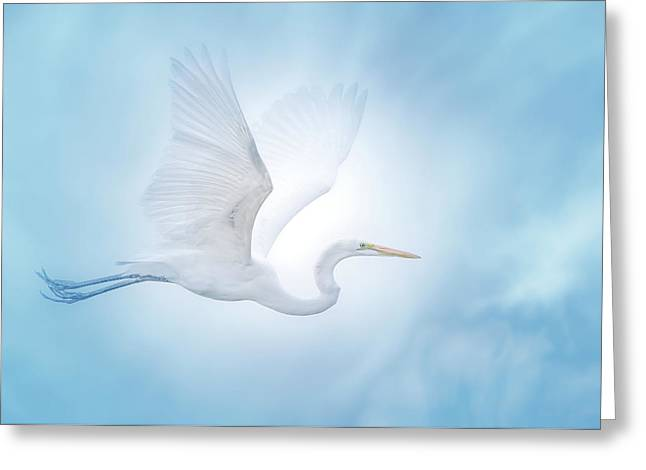 Majesty Of The Skies Greeting Card