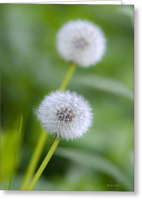 Make A Wish Dandelion Greeting Card by Christina Rollo