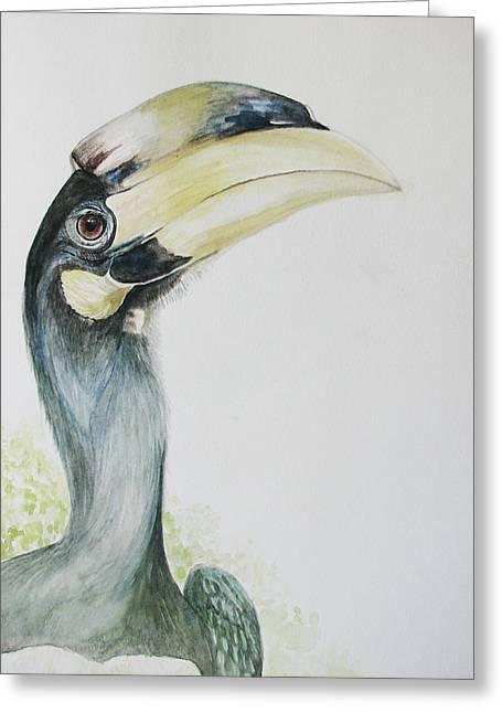 Malabar Pied Hornbill -juvenile Bird Greeting Card by Sasitha Weerasinghe