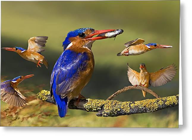 Malachite Kingfisher Collage Greeting Card by Basie Van Zyl