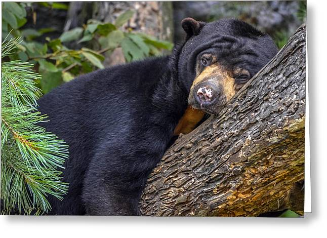 Malayan Sun Bear Greeting Card