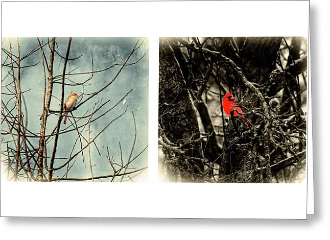 Male And Female Cardinal Greeting Card