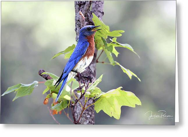Male Bluebird Greeting Card