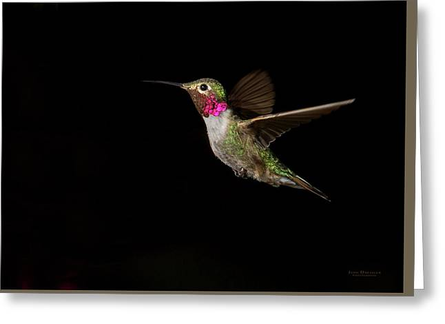 Male Broad-tailed Hummingbird Greeting Card