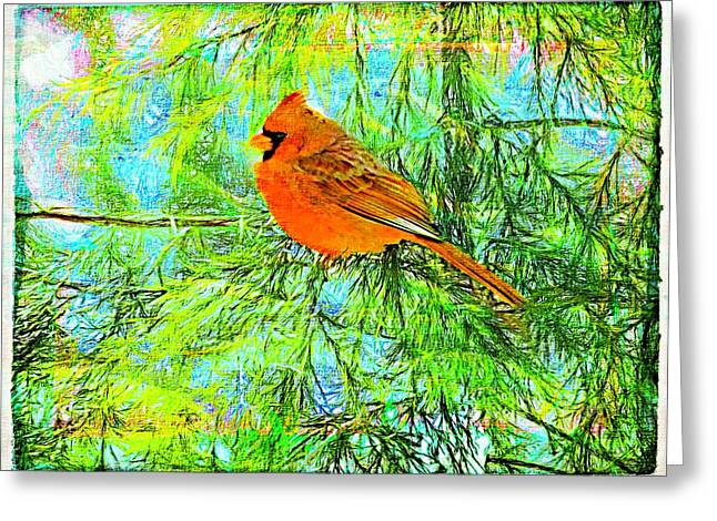 Male Cardinal In Juniper Tree Greeting Card