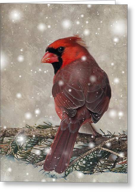 Male Cardinal In Snow #1 Greeting Card