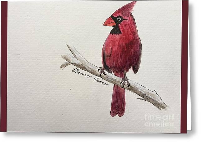Male Cardinal In Winter Greeting Card