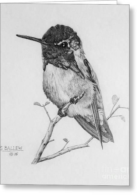 Male Costa's Hummingbird Greeting Card