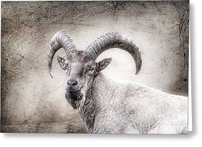 The Wild Goat With The Beard Greeting Card