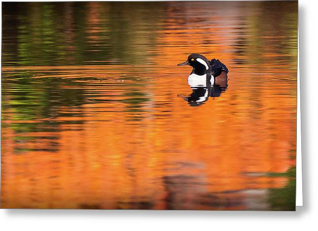 Male Hooded Merganser In Autumn Greeting Card