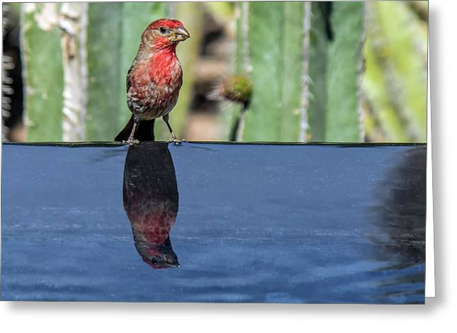 Male House Finch 7549 Greeting Card by Tam Ryan