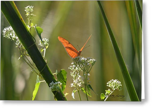 Male Julia Heliconia Butterfly Greeting Card