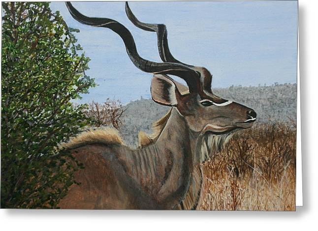 Male Kudu Antelope Greeting Card