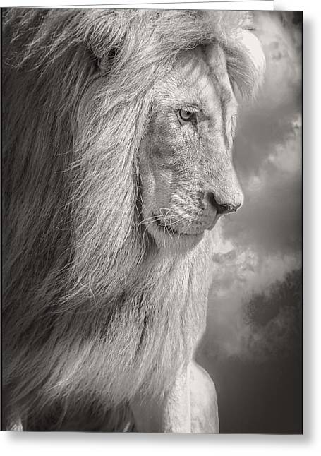 Male Lion Black And White Greeting Card